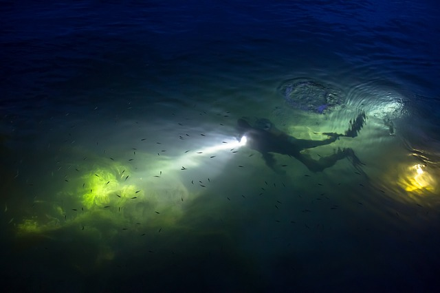 Night Diver photo